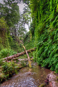 fern-glen-creek-3