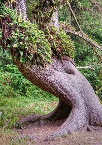 twisted-tree-trunk