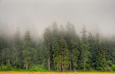 foggy-redwood-forest-3