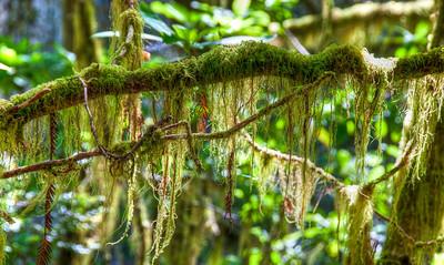 mossy-branch
