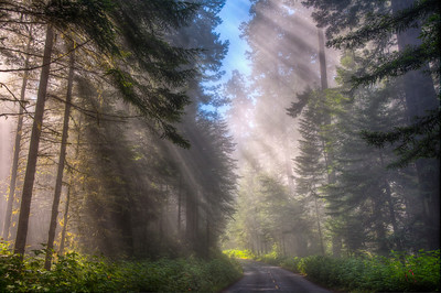 forest-sunbeams-road
