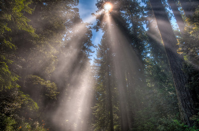 california-redwood-forest-sunbeams-2