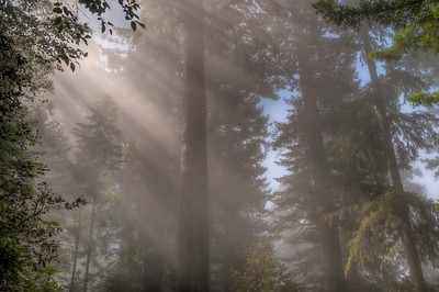 foggy-forest-sunbeams