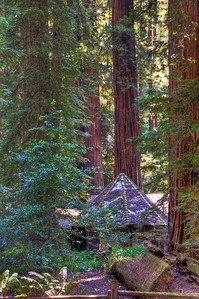 redwood-forest-cabin