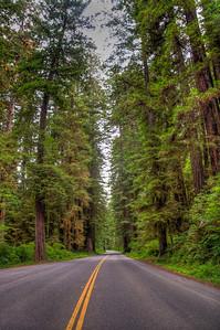 redwood-national-park-road
