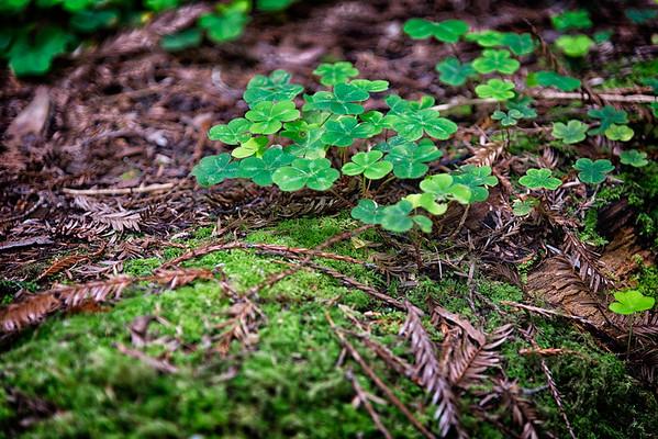 Humboldt Redwoods-3