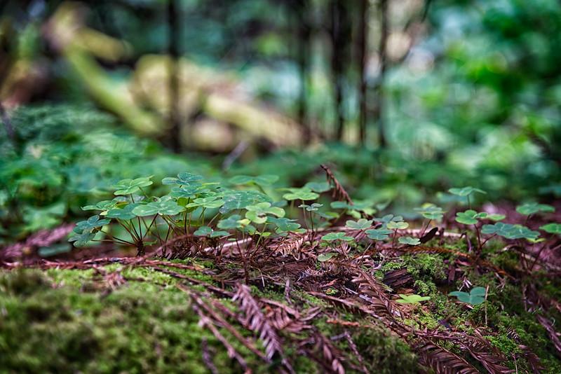 Humboldt Redwoods-5