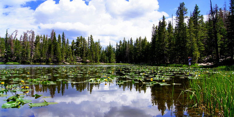 Cumulus clouds reflect off lily-covered Nymph Lake; Rocky Mountain National Park, Colorado.