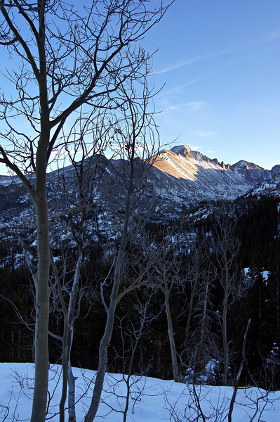 Winter aspens and the distant Longs Peak viewed from the Emerald Lake trail; Rocky Mountain National Park, Colorado.