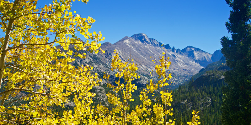 Longs Peak (14,255 ft.) and the changing aspens; viewed from the Emerald Lake trail, Rocky Mountain National Park.