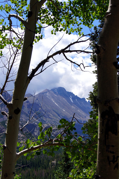 A view of Longs Peak from an aspen grove; Rocky Mountain National Park, Colorado.