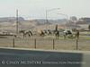 Horses, Kayenta AZ (1)