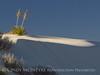 White Sands Natl Mon NM evening (1)