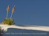 White Sands Natl Mon NM evening (2)