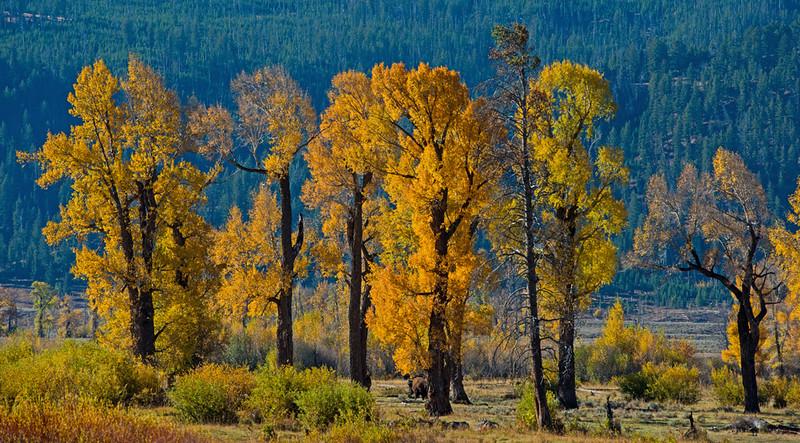 Lamar Valley, Yellowstone NP