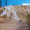 Active deposits being formed at Mammoth Hot Springs