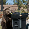 "Testing ""bear proof"" garbage cans"