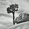 A Tree and Rock in Black and White