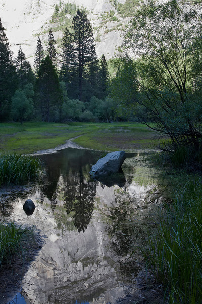 Meadow reflections