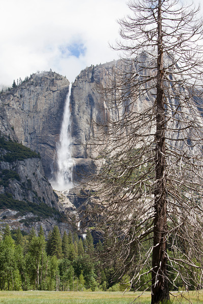 Yosemite Falls - Tree Foreground