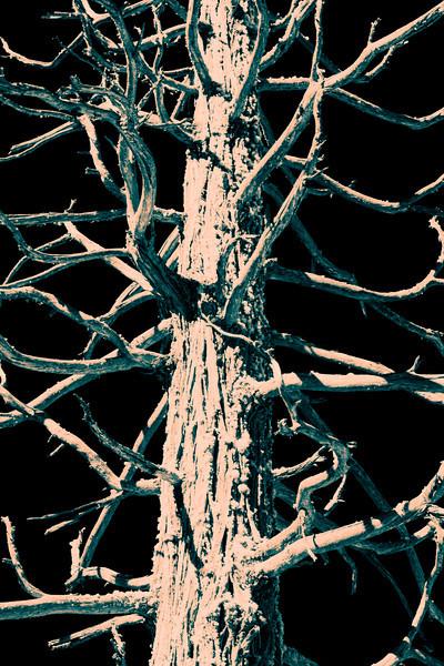 Redwood Tree - False Color