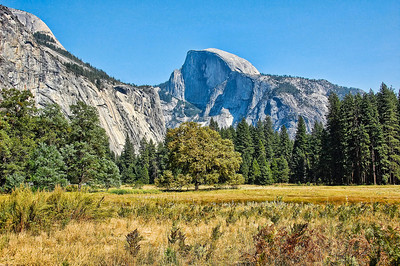 yosemite-half-dome-meadow