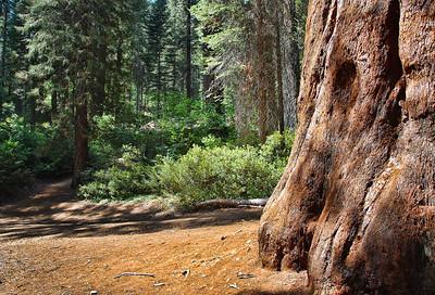 yosemite-merced-sequoia