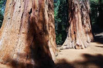 yosemite-sequoias-3