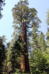 merced-grove-sequoia