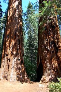 yosemite-merced-grove-sequoias-2