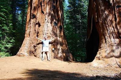 yosemite-sequoias-man