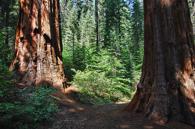 yosemite-merced-sequoias-4