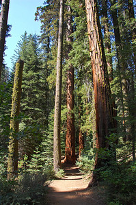 yosemite-sequoias