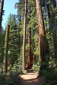 yosemite-sequoias