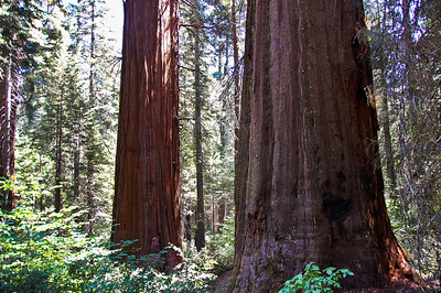 yosemite-merced-sequoias-2