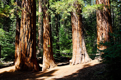 yosemite-sequoias-2