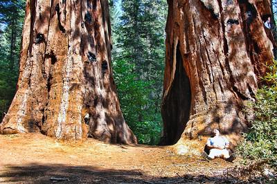 yosemite-merced-sequoias-man