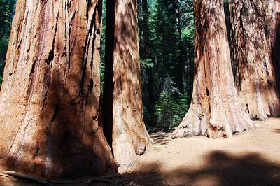 yosemite-merced-sequoias
