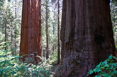 yosemite-merced-sequoias-3