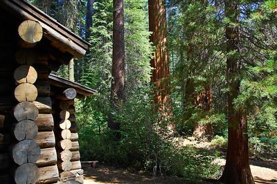 cabin-sequoias