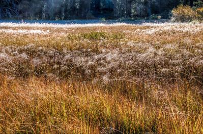 frosty-grasses