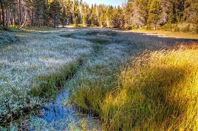 frosty-yosemite-meadow-3