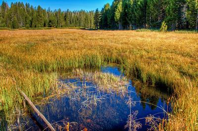 yosemite-pond-meadow-4
