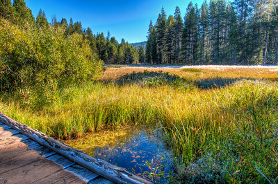 yosemite-pond-meadow-2