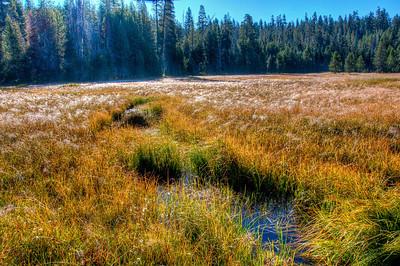 frosty-yosemite-meadow-grasses-2