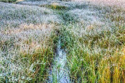 frosty-grasses-2