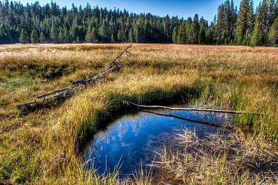 Westfall Meadow