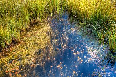 reflective-pond-2