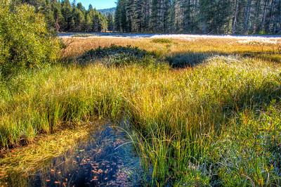 pond-yosemite-meadow