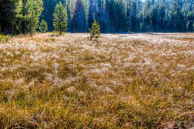frosty-yosemite-meadow-grasses